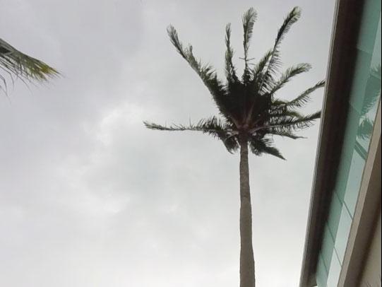 6055_palm-1.jpg